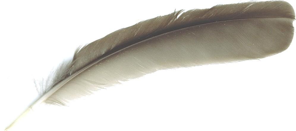 vogelfeder2.jpg